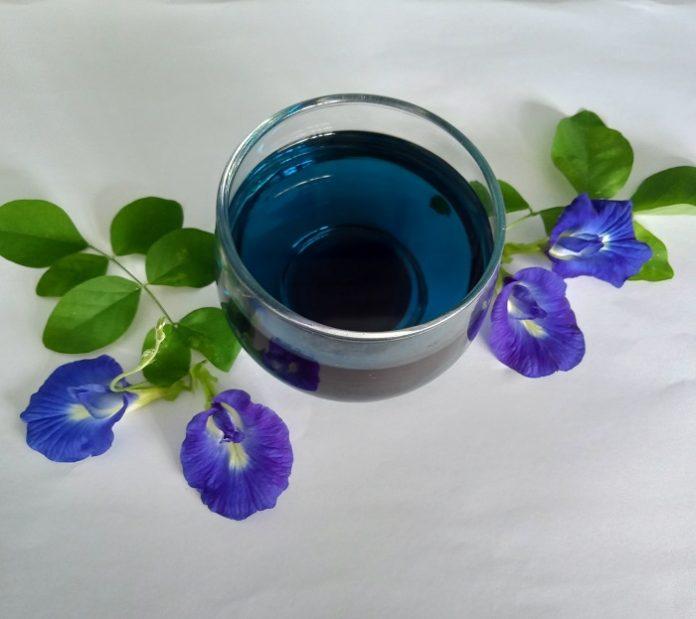 Minum teh telang selagi hangat saat perut kosong untuk mendapatkan manfaat sehatnya./foto:rin