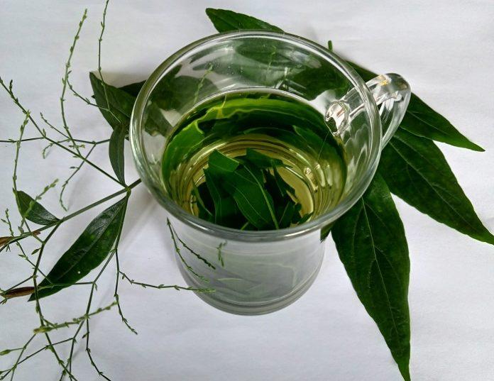 Sambiloto dapat dikonsumsi sebagai minuman teh dengan cara direbus, diseduh, atau dalam bentuk kapsul./foto: rin
